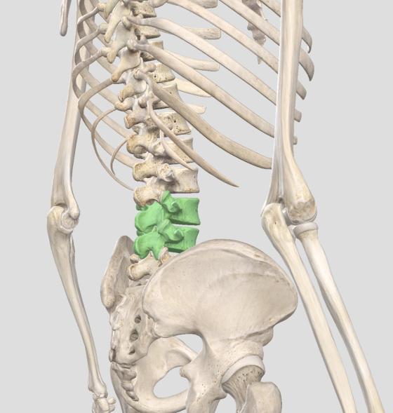 What Causes Low Back Pain Squat University