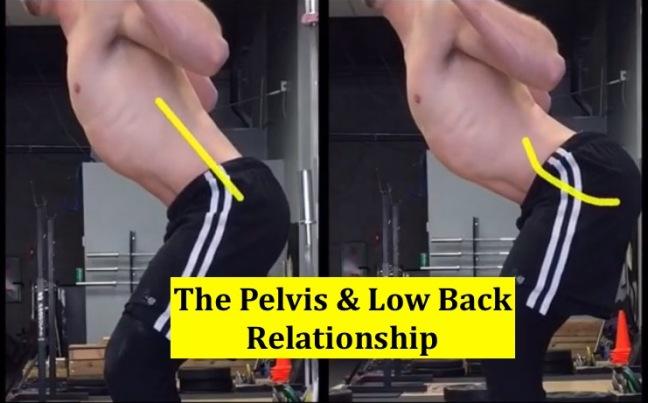cover-low-back-pelvis