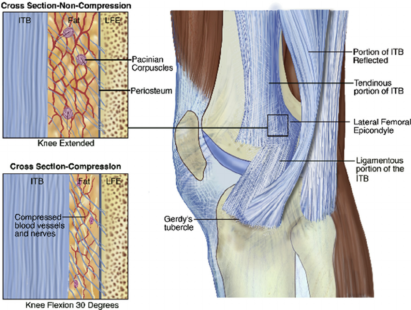 It band anatomy at knee