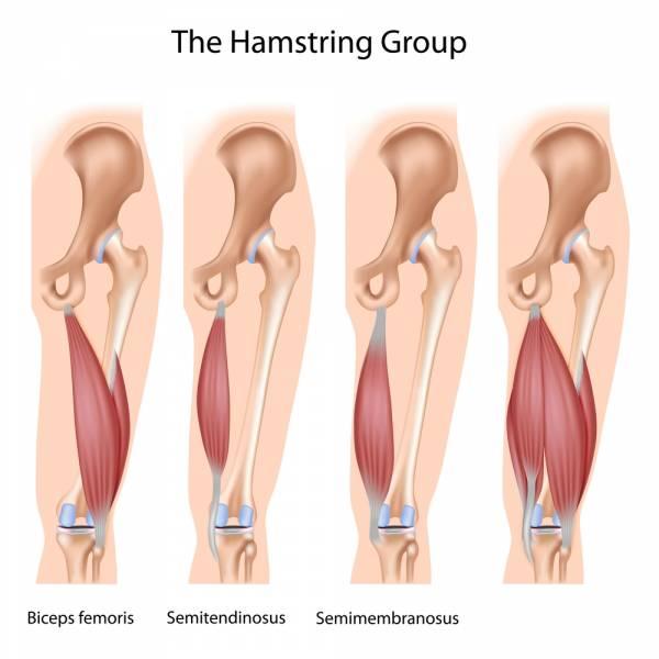Hamstrings