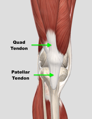 isometric and eccentric exercises for patellar tendonitis