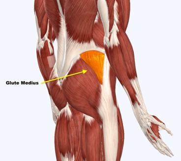 Fixing Lateral Hip Pain – Squat University
