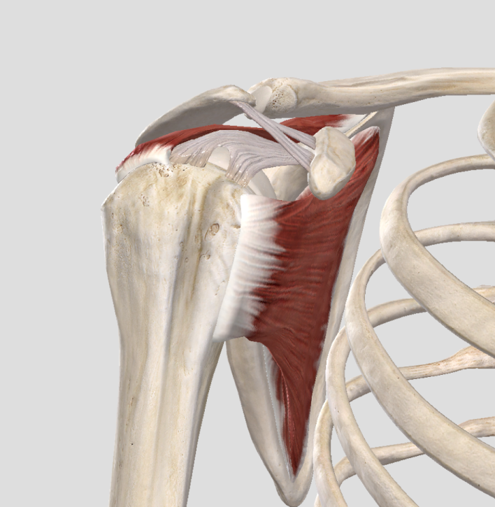 Subacromial Space.png
